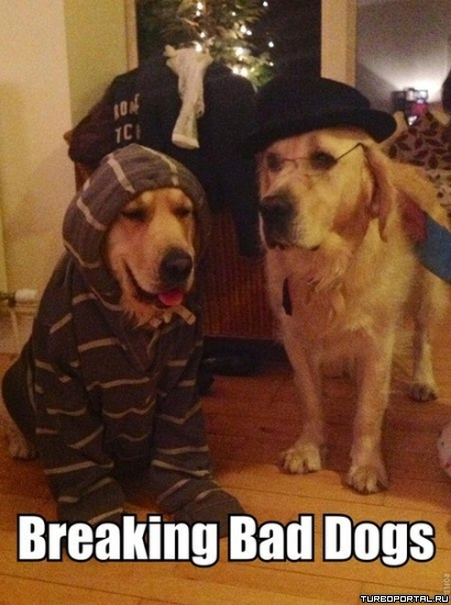 Breaking Bad dogs